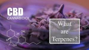 Guide to Terpenes