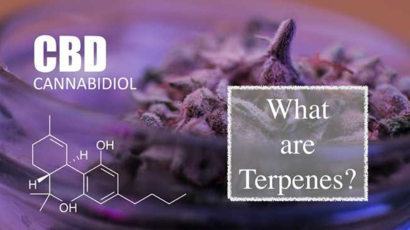 Guide to Terpenes
